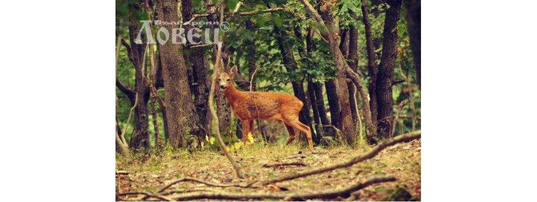 10 important things in the equipment for roe deer hunt